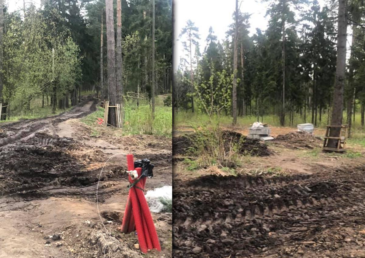 В подмосковном Пестовском лесу начали укладывать асфальтовые дорожки с бордюрами