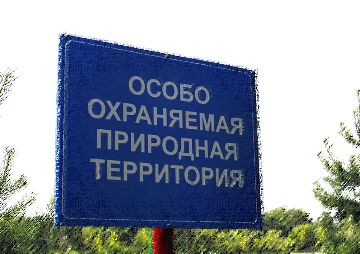 «Прежде всего стоят ресурсы, а потом природа». Редактор Красной книги Москвы назвал условия постепенной деградации